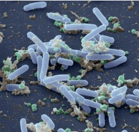 Space spores: NASA's struggle with radiation-resistant microbe could help us understand infections