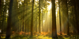 Talking Biotech: Can biotechnology help protect forests from pests, pathogens and climate change?
