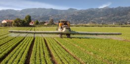 Conflicting pesticide regulations may fuel needless food safety disputes
