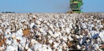 How genetic engineering helped reduce cotton's environmental footprint