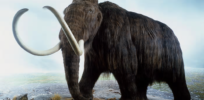 Some things to consider—including legal issues—before reviving extinct animals