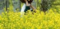 India's National Academy of Agriculture Sciences backs commercialization of GM mustard