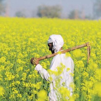 Indian agriculture expert: Don't let GM mustard go the way of GMO eggplant