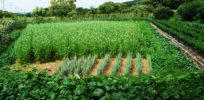 Video: Organic food is a great business but a bad environmental investment