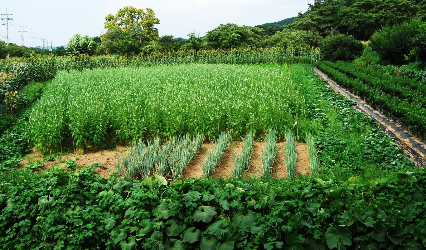 sustainability of agriculture Sustainable agriculture agriculture often places significant pressure on natural resources and the environment sustainable agricultural practices are intended to protect the environment, expand the earth's natural resource base, and maintain and improve soil fertility.