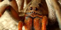 Malaria weapon: Genetically engineered fungus with spider, scorpion venom