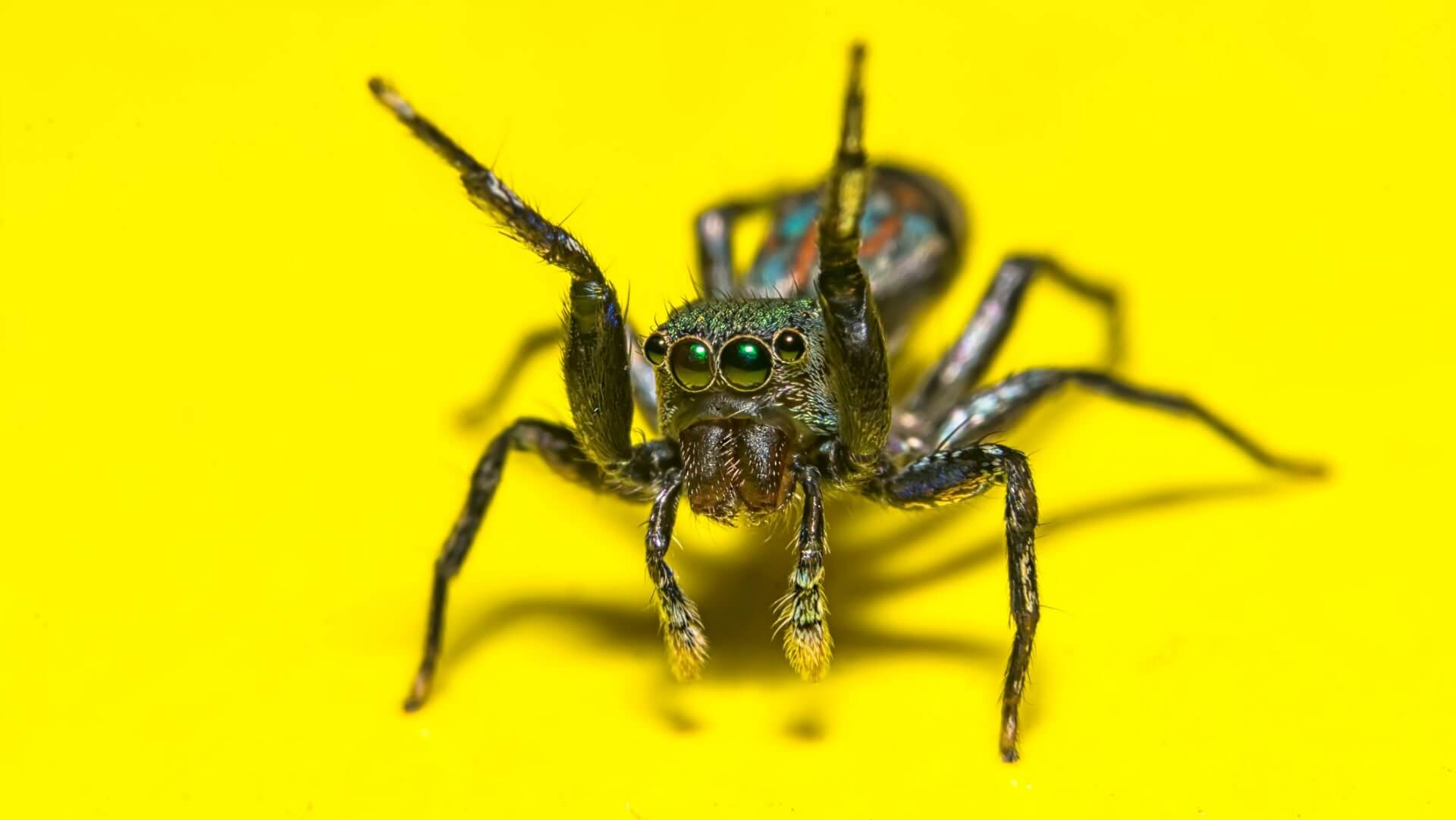 Armor of tomorrow could be derived from these 3 animals