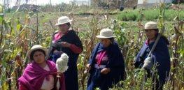 Ecuador passes law allowing GMO crop research