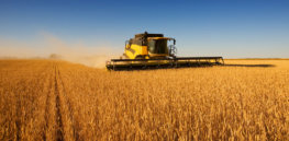 Why some Canadian farmers don't want glyphosate-tolerant GMO wheat