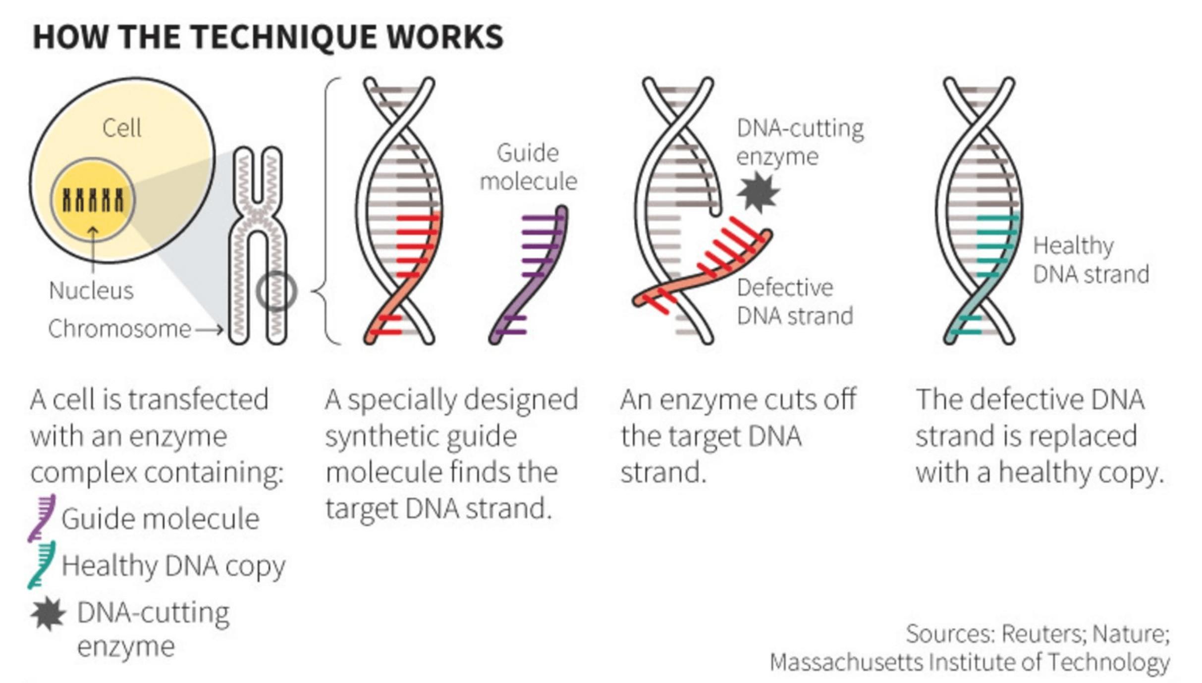 Understanding How Crispr Works The Basics Genetic