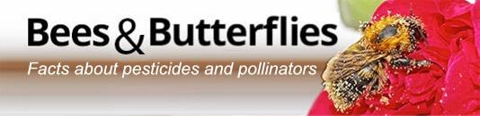 bees butterflies pollinator image updated x