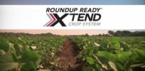 Despite drift issue, Monsanto sees 'surge' of farmers buying dicamba-resistant GMO soybean seeds