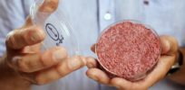 The race to grow meat without slaughtering animals—can genetic engineering help?