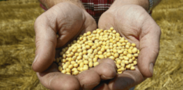 Bayer faces expensive lawsuit in Brazil as more farmers challenge firm's GMO soy patent