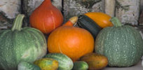 Pumpkins, cucumbers, and watermelons diverged from a single melon ancestor