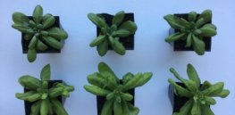 Epigenetic changes in plants could help produce food crops better suited to harsh environments
