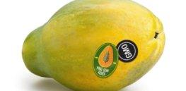 papayaStickers CROP promo xlarge