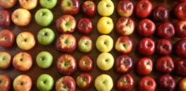 best apples for pie reupload kenji