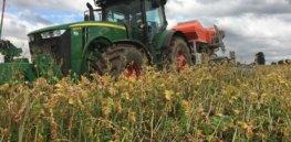 Video: How glyphosate herbicide enables no-till, environmentally friendly farming