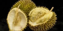 Researchers map genome of famously strong-smelling durian fruit