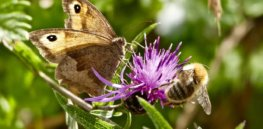 UK backs complete EU ban of neonicotinoid insecticides, citing harm to pollinators