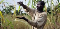 Uganda on track to pass 'biotech bill' that should pave way for GMO crop commercialization