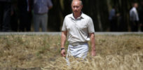 Opinion | Putin's 'sock puppets': How Russia 'uses' anti-GMO activists to undermine crop biotech and science