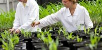 Food, vaccines and medicine: How plant scientists are changing the world