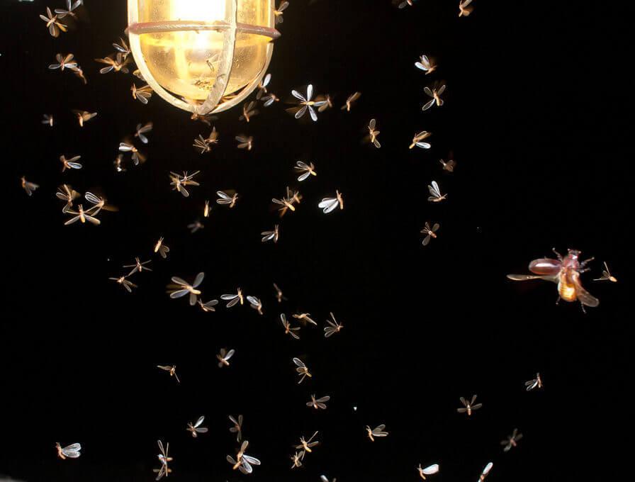 Bugs and LED Lighting e