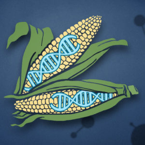 CRISPR superplants e