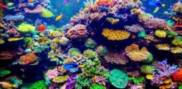 Colorful coral reef x q crop scale