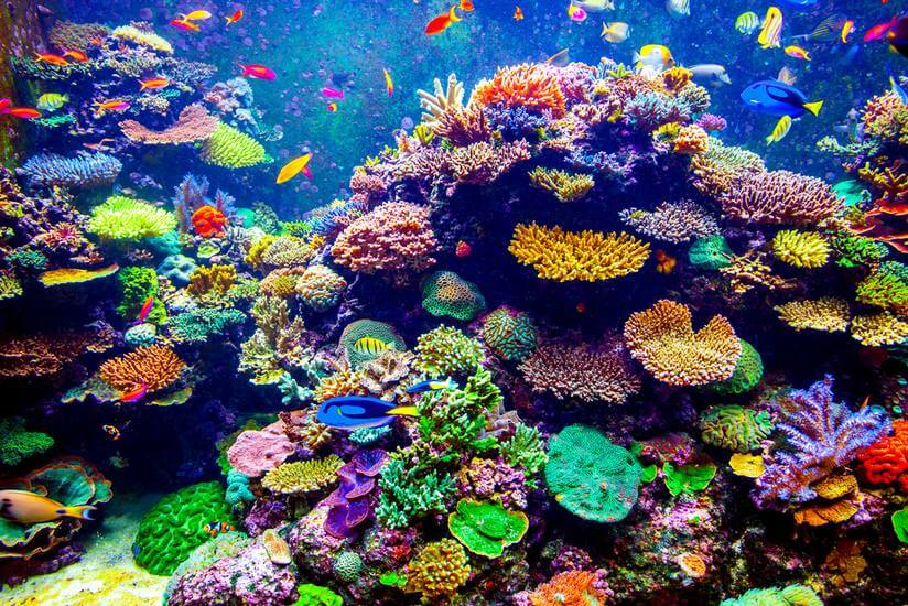 Image result for image of coral reef