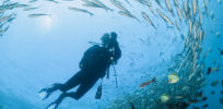 Corbis RF stock reef fish scuba diver ocean e