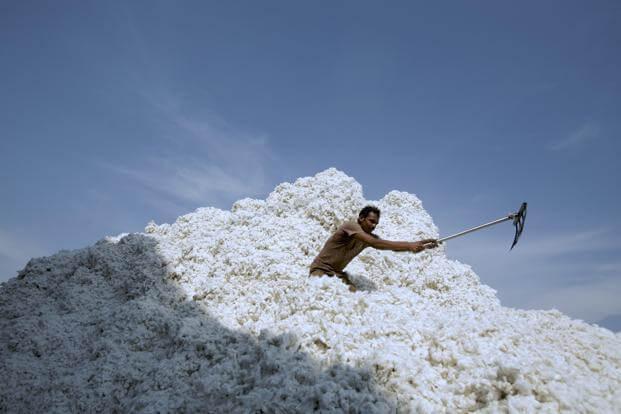 Cotton C kesH x @LiveMint