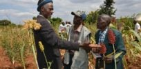 As African countries develop GMO crops, scientists escalate communication outreach