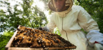 Viewpoint: Greenpeace, environmental activists spread misinformation on honeybees and pesticides