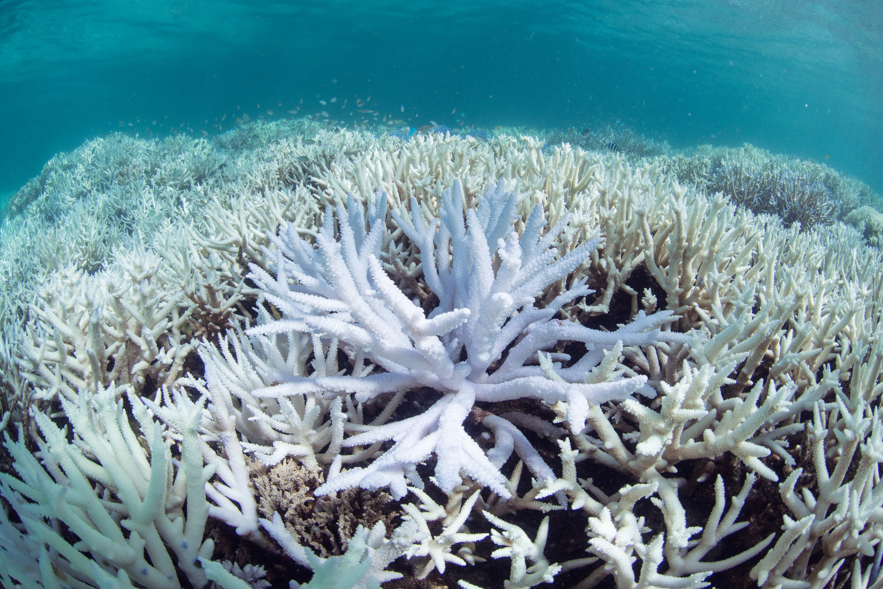 EXCLUSIVE Coral bleaching in New Caledonia