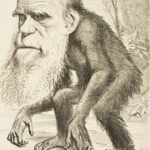 Editorial cartoon depicting Charles Darwin as an ape x