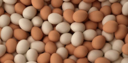 Eggs Chicken Fresh Table Eggs farm fresh