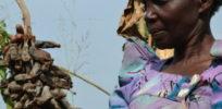Frances Nanziri Ugandas Food Evolution Farmer x