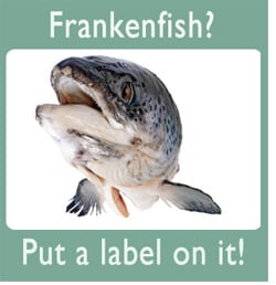 frankenfish essay 'frankenfish': fda sued over first gmo animal rt america loading unsubscribe from rt america cancel unsubscribe working 'frankenfish.
