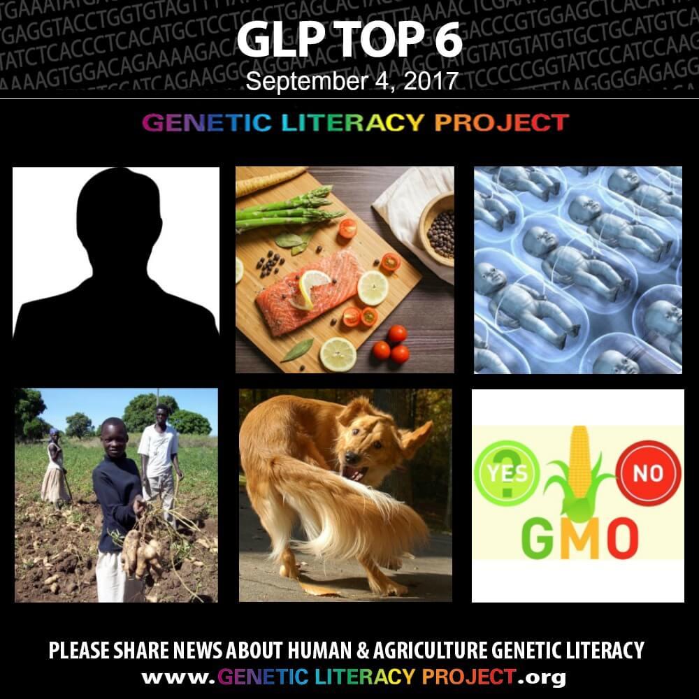 GLP Top thumbnails Sep