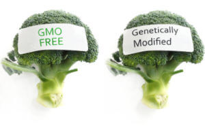 GMO vs non genetically modified broccoli