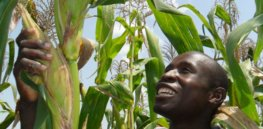 Isaac Okwanyi admires a maize crop on his farm