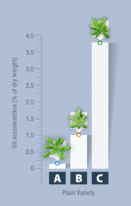 Plant Oil Production Chart