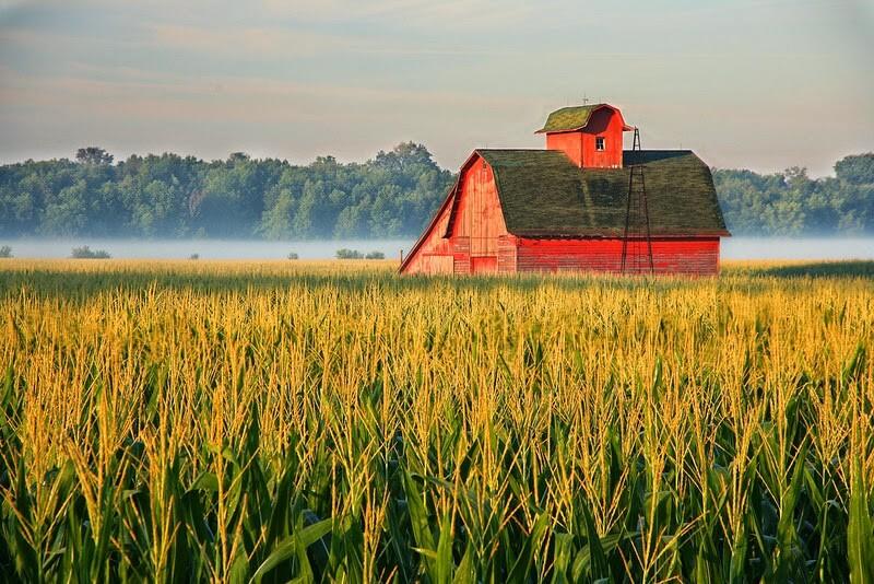 Redbarn cornfield mist L
