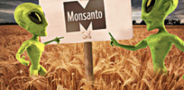 Opinion: Bloomberg journalists botch another anti-Monsanto article