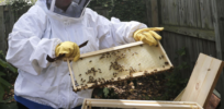 Why hobby beekeepers may present the biggest threat to honeybee health