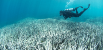 Genetically engineered coral might bring bleached coral reefs back to life