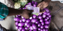 Bangladesh to provide incentives for farmers to grow more GMO Bt eggplant
